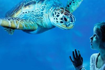 billet d entr 233 e 224 l aquarium sea pas cher 224 11 au lieu de 15 75