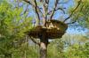 cabane dans les arbres paris