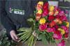 promo les fleurs de nicolas