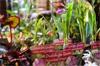 printemps des jardiniers paris