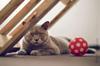 hotel insolite pour chat a paris