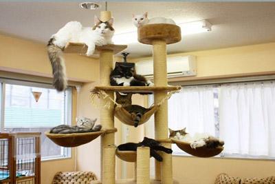 Cafe des chats paris menu