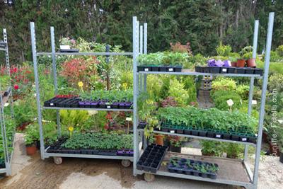 plantes vertes pas ch res seulement 1 euro. Black Bedroom Furniture Sets. Home Design Ideas