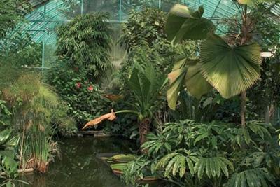 Jardin botanique gratuit for Jardin 16eme
