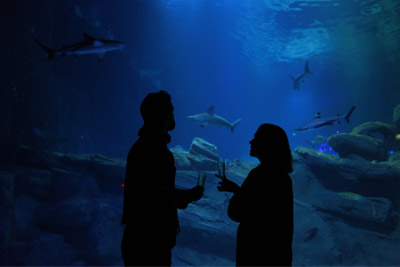 soiree aquarium paris